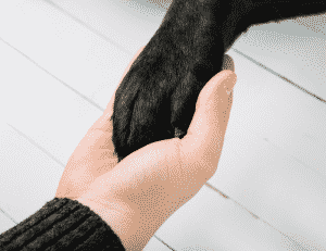 dog paw on womans hand