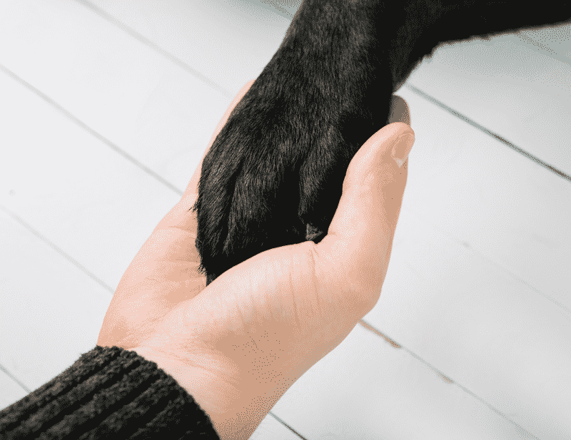 Is A Service Animal Right For Me?